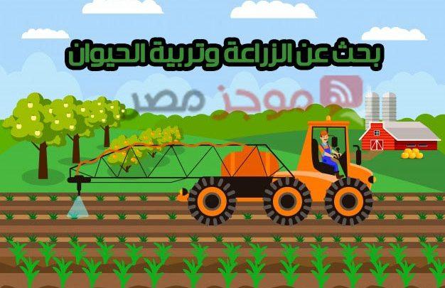 بحث عن الزراعة وتربية الحيوان