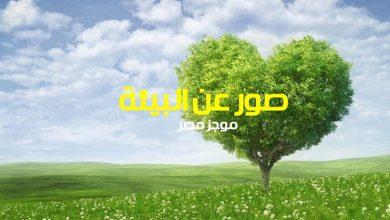 Photo of صور عن البيئة بحث للصف الاول والثاني والثالث الاعدادي 2020