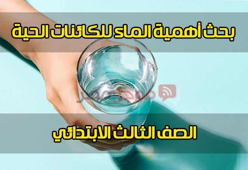 أهمية الماء للكائنات الحية