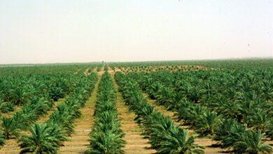 Photo of اهم المحاصيل الزراعية في المملكة العربية السعودية