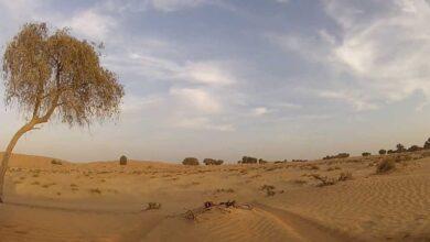 Photo of انواع النباتات الطبيعية في الامارات