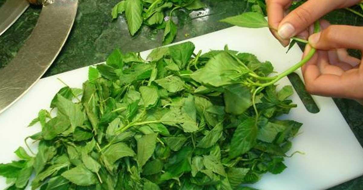 تفسير حلم أكل الملوخية الخضراء المطبوخة لابن سيرين ولابن شاهين