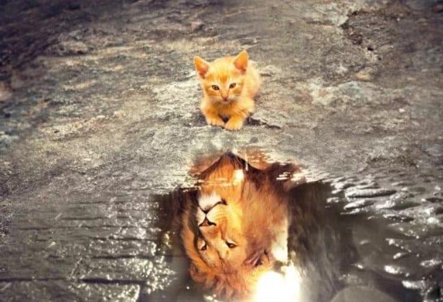 تفسير حلم عضة القطة في اليد للنابلسي وابن شاهين وابن سيرين