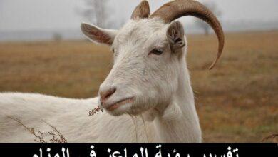 Photo of تفسير رؤية الماعز في المنام لابن سيرين وللنابلسي