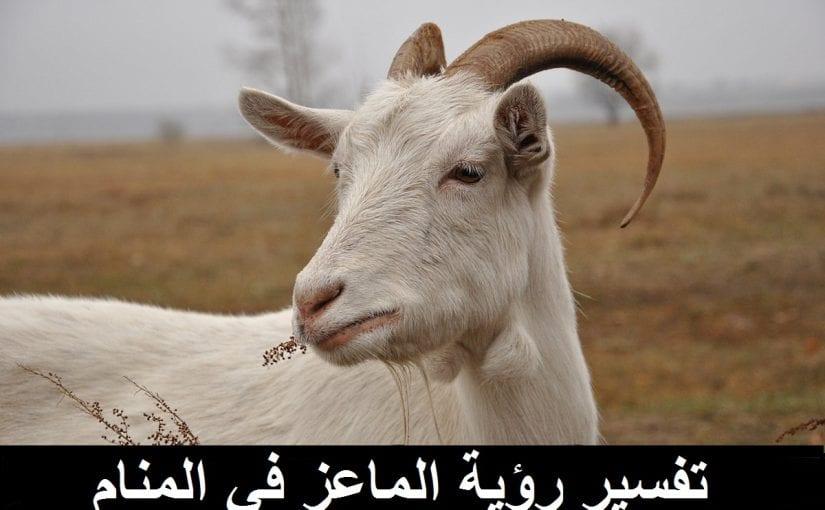 تفسير رؤية الماعز في المنام لابن سيرين وللنابلسي