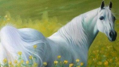 Photo of رؤية الحصان في المنام للعزباء وللمرأة المتزوجة وللحامل وللرجل