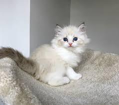 ما تفسير رؤية القطط في المنام ومحاولة إخراجها من البيت ؟