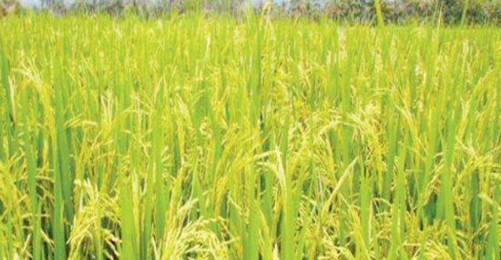 أهم المحاصيل الزراعية في مصر ( الصيفية والشتوية ) وما هي أهم العناصر الطبيعية لقيام الزراعة؟