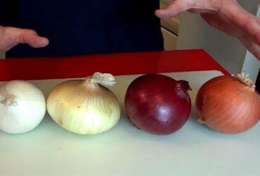الفرق بين البصل الأبيض والأحمر وما هي فوائدهما