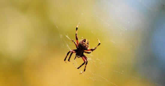 تفسير حلم العنكبوت الأبيض لابن شاهين وما هو تفسير لدغة العنكبوت ذو اللون الابيض