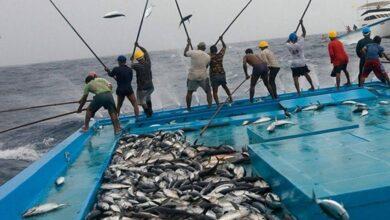تفسير حلم اصطياد السمك بالسنارة او باليد لابن سيرين